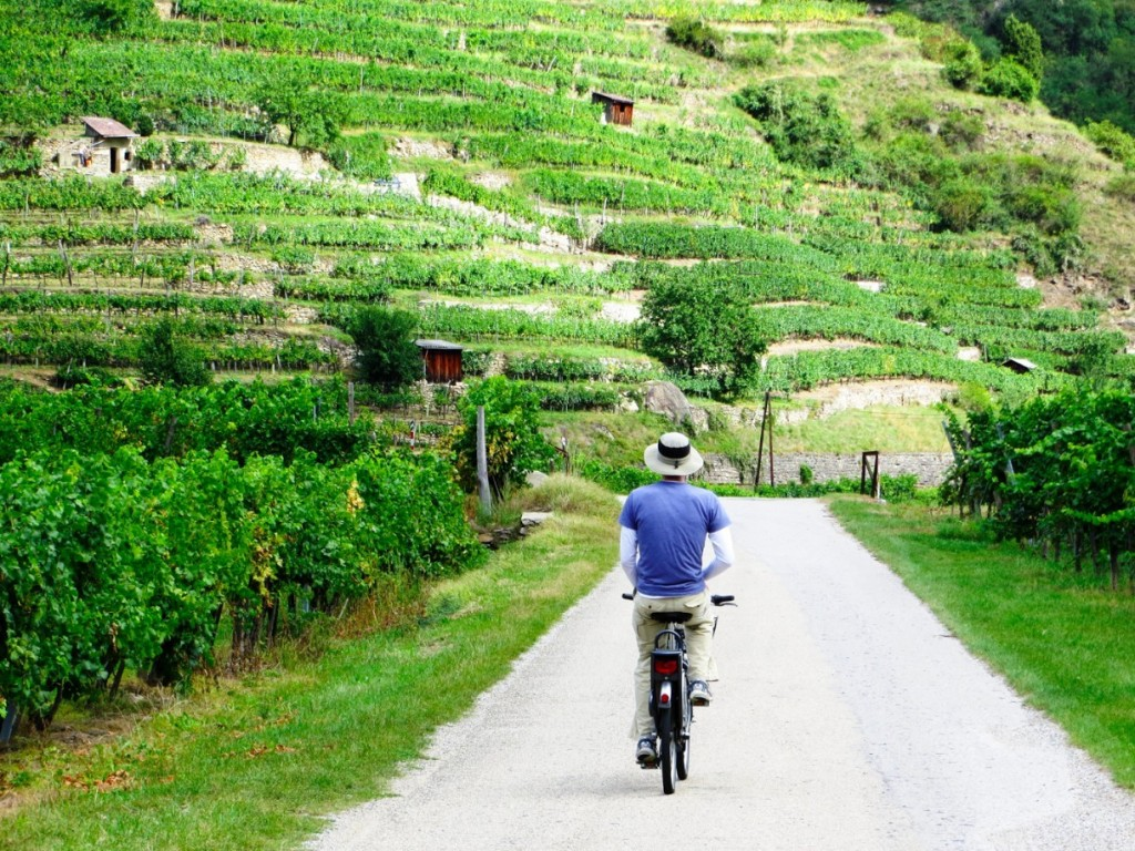 Gourmand Guide to Vienna  Vineyards